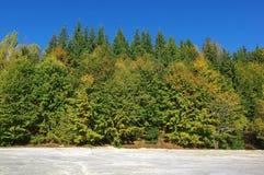 白陶土矿在森林里 库存照片