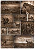 黑白非洲的徒步旅行队 免版税图库摄影