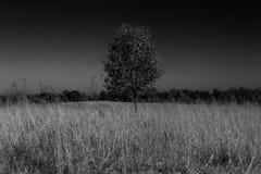黑白领域 库存照片