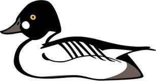 白颊鸭鸭子 向量例证