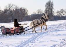 白马关闭在冬天公园 免版税库存图片