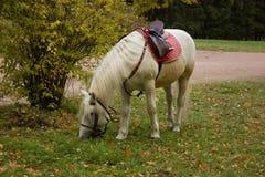 白马在公园 免版税库存图片