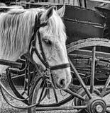 白马画象被利用对有鞔具和whe的一个推车 库存图片