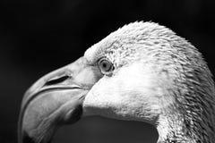黑白鸟图片 库存照片