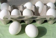 白鸡蛋行 免版税库存图片
