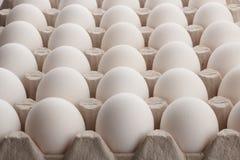 白鸡蛋 免版税库存照片