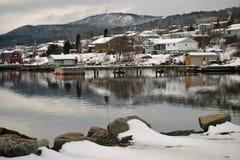 白鹅Verte纽芬兰 库存图片