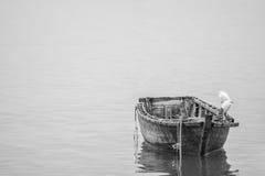 白鹭和木头小船 免版税库存照片