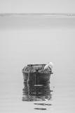 白鹭和木头小船 免版税库存图片
