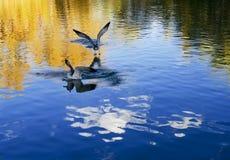 白鹭在布达拉宫附近自由地飞行 免版税库存照片