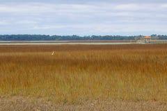 白鹭在沼泽 免版税库存图片