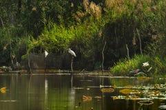白鹭在高跷的鸟立场在湖waterbird公园 免版税库存图片