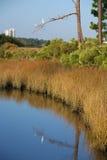 白鹭栖息结构树白色 库存照片