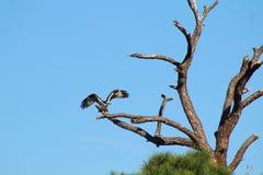 白鹭的羽毛树 库存照片