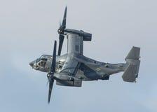 白鹭的羽毛直升机 库存图片