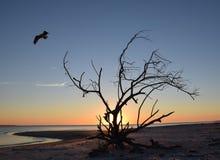 白鹭的羽毛离去的漂流木头 库存图片