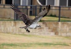 白鹭的羽毛 免版税图库摄影