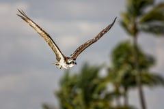 白鹭的羽毛 库存照片
