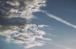 白鹭 免版税图库摄影