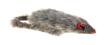 白鼬猫玩具侧视图 免版税库存照片