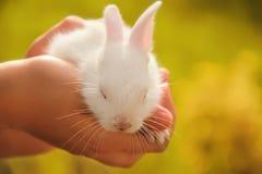 白婴孩逗人喜爱的兔子 免版税库存图片