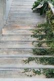 白水泥台阶盖了绿色叶子常春藤植物 绿叶安置家庭装饰设计想法 免版税图库摄影