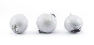 白洋葱-正面图的构成在白色背景的 免版税库存图片