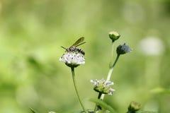 黑白黄蜂 库存照片