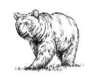 黑白刻记被隔绝的传染媒介熊 免版税库存照片