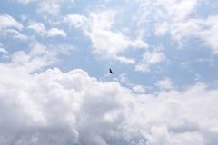 白头鹰在飞行中反对蓝天和云彩 库存照片