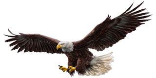 白头鹰飞行颜色传染媒介 免版税库存照片