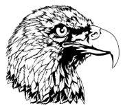 白头鹰头例证 免版税库存图片
