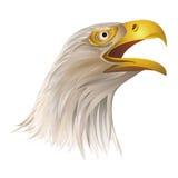 白头鹰头在白色背景的 库存例证