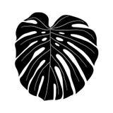 黑白Monstera的叶子 免版税库存照片