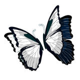 黑白Morpho butterfliese蝴蝶的国君 向量 免版税图库摄影