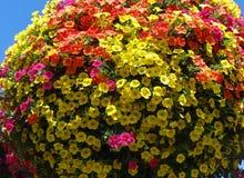 百万响铃在一个垂悬的篮子的多种颜色开花 免版税图库摄影
