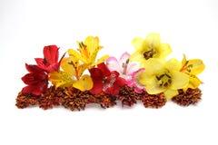 百合、德国锥脚形酒杯和菊花被生动描述的头状花序  库存照片