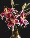百合属植物百合speciosum 库存图片