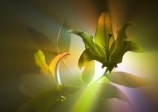 百合属植物 免版税库存图片