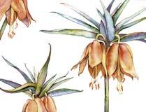 百合属植物 免版税库存照片