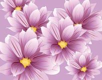 百合开花构成 库存照片