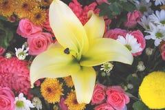 百合有其他花背景 库存图片