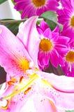 百合桃红色热带 库存照片