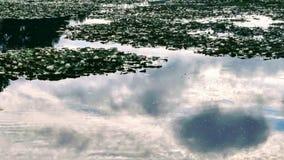 百合池塘 免版税库存图片