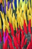 百合科植物cylindrica种植天鹅绒接触 库存图片