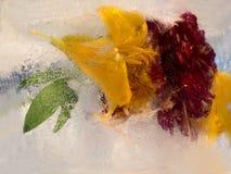 百合背景和牡丹开花冻在冰 免版税库存图片