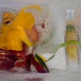 百合背景和牡丹开花冻在冰 库存图片