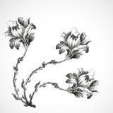 百合,葡萄酒背景例证三朵花手拉的花束  免版税库存图片