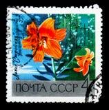 """百合\ """"苗条\"""",莫斯科植物园serie,大约1969年 免版税图库摄影"""