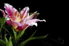 百合 花束 库存图片